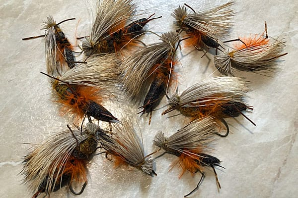 Cat Puke Fly Salmonfly Intimation