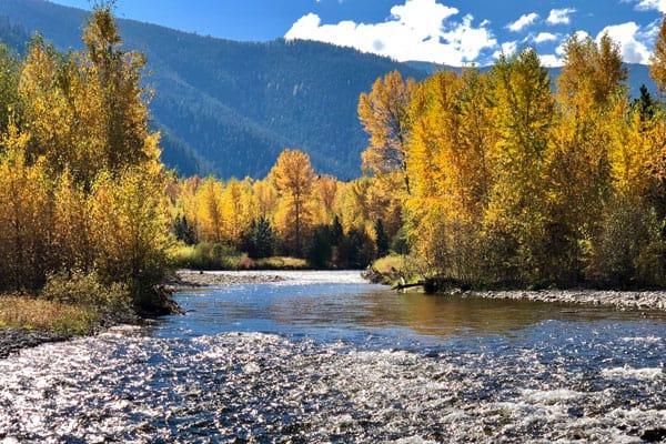 October Leaves Color Rock Creek Montana