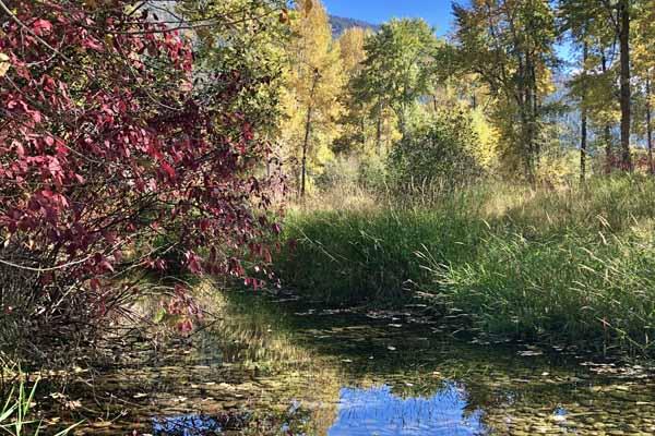 Rock Creek changing leaves